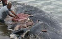 Бутылки и шлепки: в желудке кита нашли 6 кг пластика