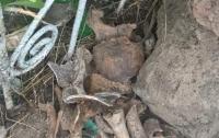 В Николаеве среди мусора нашли останки людей