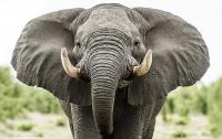 Слон топил туристов в реке (видео)