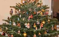 Новогоднее дерево активно скупают на несколько дней