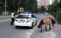 Патрульные ловили пони по улицам Киева (видео)