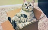 В Великобритании кошку по ошибке отправили посылкой
