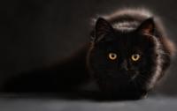 Кот или ворона: новая оптическая иллюзия стала вирусной