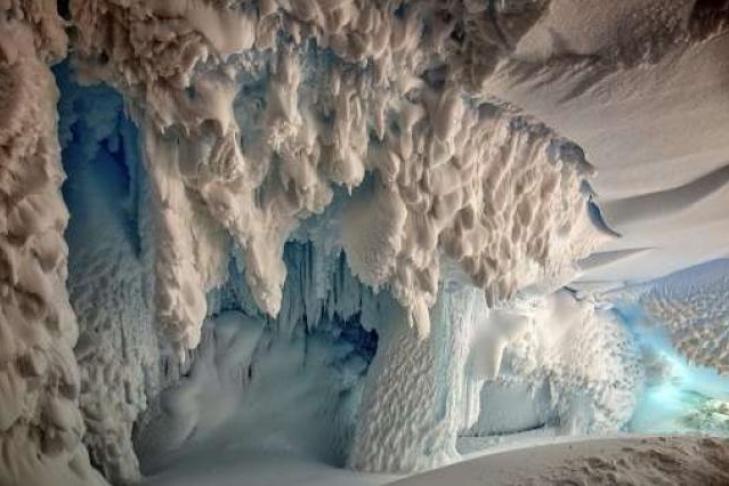 В Антарктиде нашли неизвестных науке животных