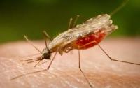Два жителя Запорожья заболели малярией