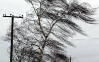 Сильный ветер грузовиком убил человека на Херсонщине