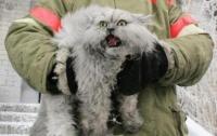 Пожарные спасли из горящего дома полуживого кота (Видео)