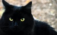 В Германии блудный кот вернулся домой спустя 18 лет