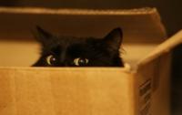 Не пустил хозяев: кот закрылся в квартире