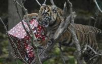Животные в лондонском зоопарке получили рождественские подарки (ФОТО)