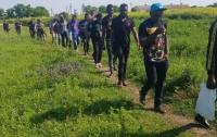 Несколько десятков африканцев валили лес под Киевом
