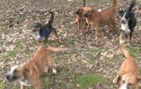 Женщина столкнулась со сворой псов и попала в больницу с сотнями укусов