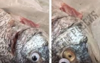 Продавец магазина приклеивал мертвой рыбе пластиковые глаза