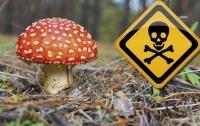 Шестеро киевлян попали в реанимацию из-за отравления грибами