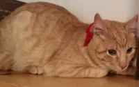 Один из львовских музеев взял на работу кота