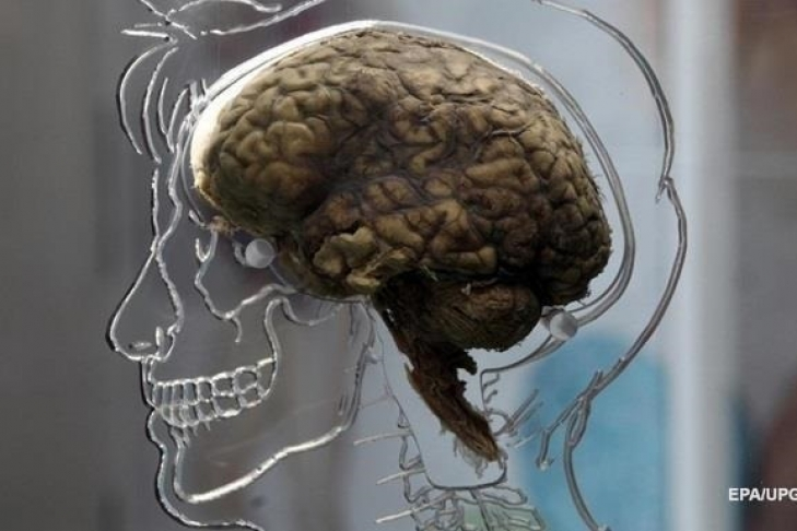 Нейробиологи узнали, как перемещается мысль вмозге