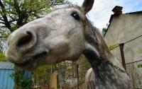 Неадекватная лошадь целый час бегала по центру Москвы