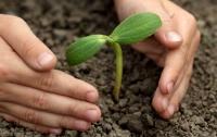 Специалист дает советы по правильной высадке деревьев