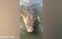500-килограммовый крокодил едва не откусил оператору голову (видео)