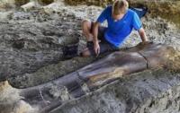 Найдены кости крупнейшего зверя в истории (видео)