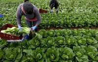 Германия продлит разрешение на въезд сезонных работников — сроки