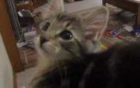 Котенок-пародист демонстрирует свои уникальные способности (ВИДЕО)