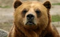 На Закарпатье открылся специальный центр для запуганных медведей