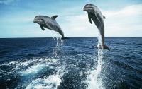 Дельфины в очередной раз удивили ученых