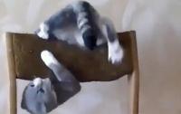 Акробатические трюки кота поразили интернет-пользователей