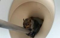Застрявшая в туалете белка переполошила студентов общежития