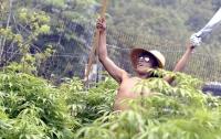 Нелегальный торговец марихуаной стал миллионером и начал платить налоги
