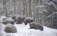 Много проблем создает погода для украинских медведей