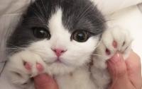 В Новой Зеландии хотят полностью запретить котов