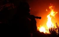 В результате пожара в Калифорнии погибли 46 скаковых лошадей
