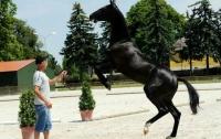 Редкостные полтавские кони стали лучшими в Европе