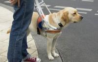 В Днепропетровске из дворняжек будут делать собак-поводырей