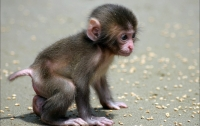 В индийском лесу обнаружили обезьян, умерших от сердечного приступа