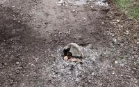 В Донецкой области полицейская машина подорвалась на мине, есть жертвы