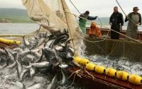 Чи може рибна галузь стати такою ж успішною в Україні, як бджільництво?
