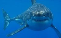 Акула утащила под воду кормившую ее туристку: шокирующее видео