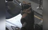 Огромный пчелиный рой атаковал жителей Лондона (видео)