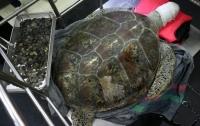 Хирурги достали из черепахи 915 монет, которые туристы оставляют в водоемах