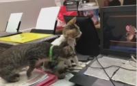 Интернет-пользователей насмешило видео с котятами, смотрящими мультфильм