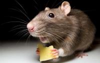 Мышь ела суши на витрине: еще один супермаркет Киева попал в скандал (видео)
