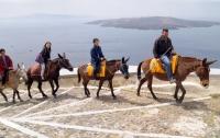 Защитники животных объявили, что греческие ослы в опасности