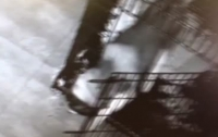Пес сбежал из клетки и освободил друзей в Китае (Видео)