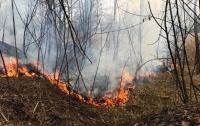 В Киеве пылала огромная стихийная свалка