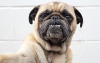 В Германии у должников изъяли собаку и продали ее в интернете