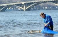 В Днепр выпустили пять тонн полезных рыб-санитаров