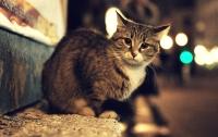 В Киевсовете согласовали запрет на отлов бездомных котов